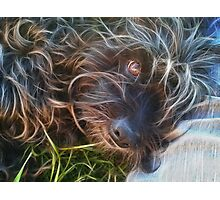 Life is Better with a Dog  Photographic Print