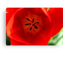 Pink Tulip Macro Canvas Print