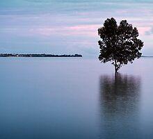 Fanny Bay Mangrove.  by DaveBassett
