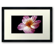 Pink Flower Close-Up Framed Print