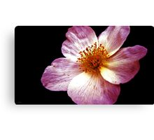 Pink Flower Close-Up Canvas Print