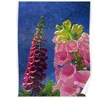 Two Foxglove flowers with textured background Poster