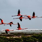 Flamingo Formation by dcdigital