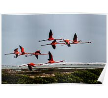 Flamingo Formation Poster