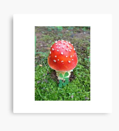 Red Spotted Mushroom Photo Canvas Print