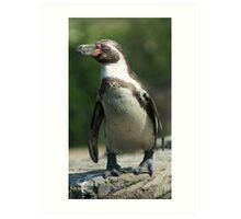 Posing Penguin Art Print
