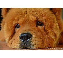 Bruno, the bear Photographic Print