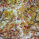 Autumn Colours by SD Smart