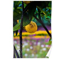 Lemon Tree 'The Lost Gardens of Heligan' Poster