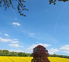 Rural Hampshire in Springtime by Alex Cassels