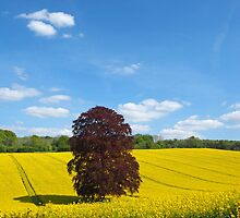 Rural Hampshire in Springtime 2 by Alex Cassels