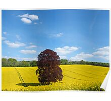 Rural Hampshire in Springtime 2 Poster