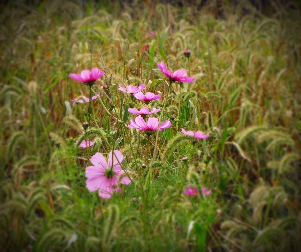 Wild Flowers by David Dehner