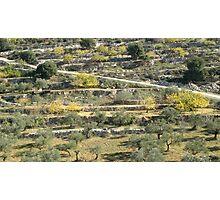 from Palestine - Beit Jala  Photographic Print