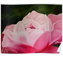 Pink Rose Macro Poster