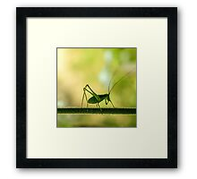 cricket in green  Framed Print
