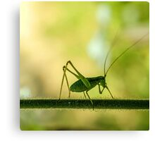 cricket in green  Canvas Print