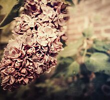 Faded Lilac by KatMagic Photography