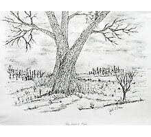 Poygan Payment Tree Photographic Print