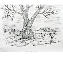 Poygan Payment Tree Photographic Print