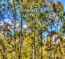 A Forest Glade by DavidHornchurch