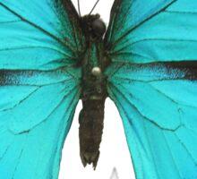 Blue Admiral butterfly sticker Sticker