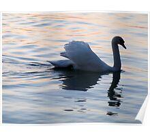 Nightly Swan Dancer  Poster
