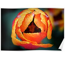 Abstract tulip Poster