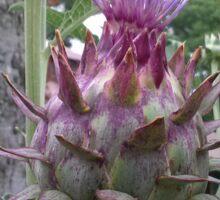 Flowering Artichoke - Partial Bloom Sticker