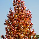 57 fall color by pcfyi