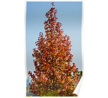 57 fall color Poster