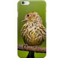 Pine Siskin With Yellow Coloration iPhone Case/Skin