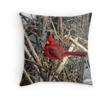 Cardinal in March Throw Pillow