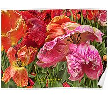 Colorful Parrot Tulips Poster