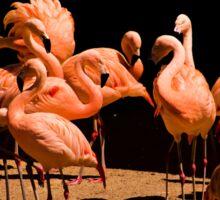 Flamingos Sticker
