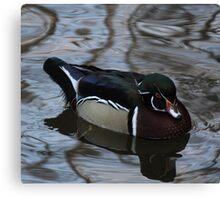 Wood Duck ( Drake ) Canvas Print