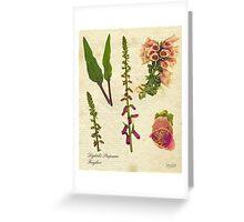 Digitalis purpurea botanical print Greeting Card