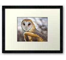 The Utterly Fascinating Barn Owl Framed Print