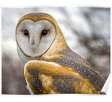 The Utterly Fascinating Barn Owl Poster
