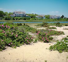 Edgartown Shore by Elizabeth Thomas