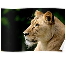 Big Cat No.3 Poster