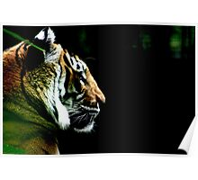Big Cat No.5 Poster