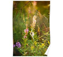 Argiope at Sunrise Poster