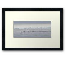 Penguin Dive Framed Print