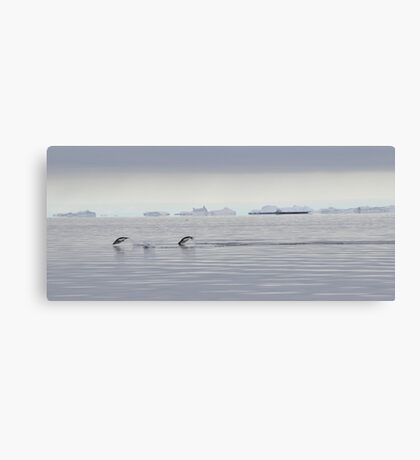 Penguin Dive Canvas Print
