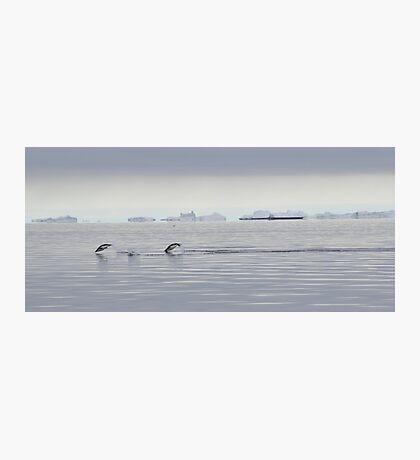 Penguin Dive Photographic Print