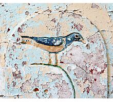 Wall Bird Photographic Print