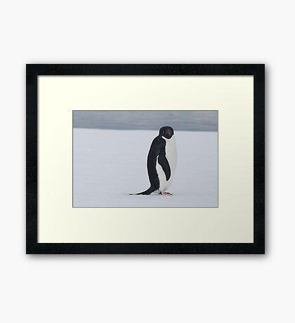 Penguin stare Framed Print