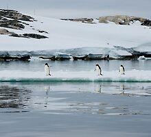 Penguin Party by JessieRabbit