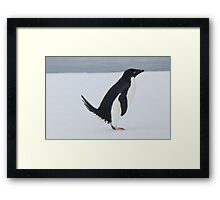 Penguin Pooping Framed Print